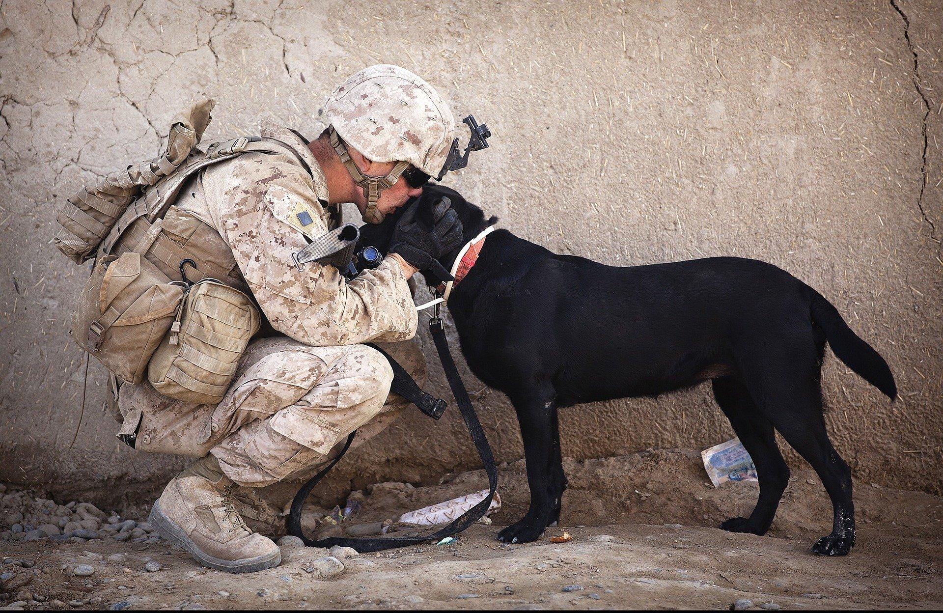 Un perro desprecia a su dueño al volver de Afganistán