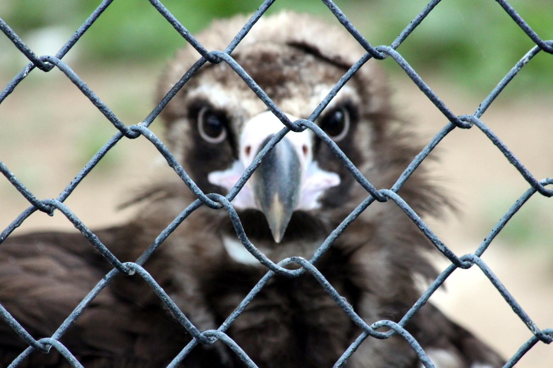 """Los animales de los zoológicos se pronuncian durante el confinamiento: """"¿Ahora qué se siente, cabrones?"""""""