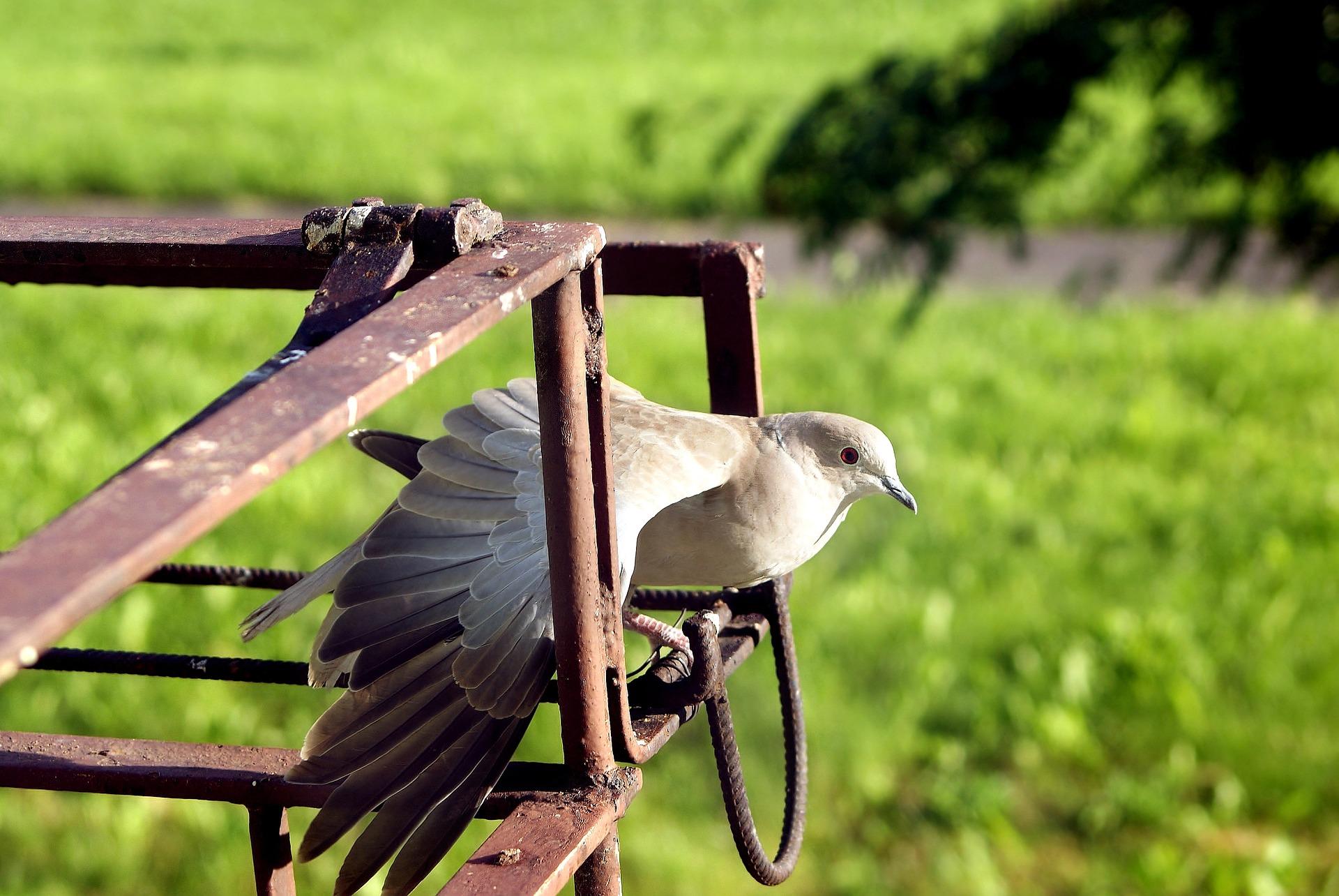 Las deficiencias de la enseñanza 'online' española obligan a un colegio a usar palomas mensajeras
