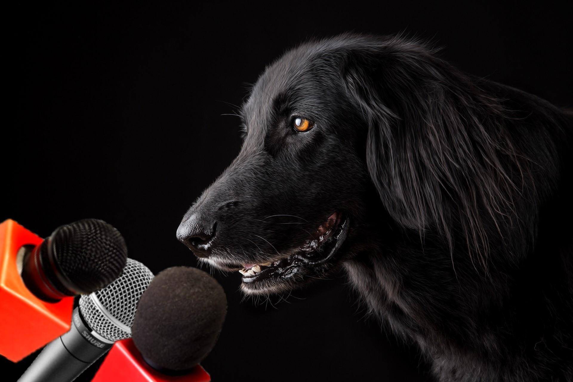 El sindicato canino se niega a la adopción de más perros durante el confinamiento